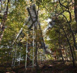 Morris Arboretum Tree adventure 3